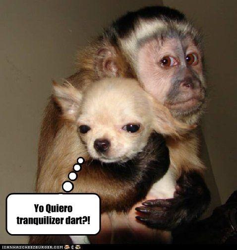 Yo Quiero tranquilizer dart?! - Cheezburger - Funny Memes