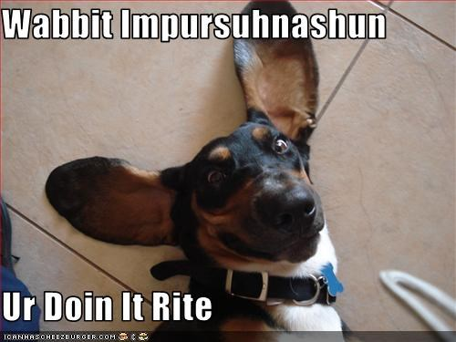 basset hound bunny ears doin it rite ears impression - 2711307776