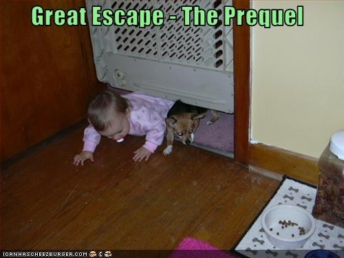 baby chihuahua escape freedom gate human - 2714650368