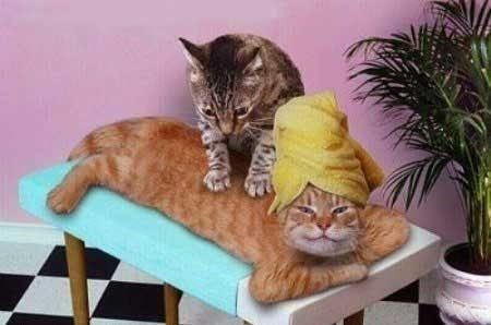 a funny picture of a cat smiling and another cat giving the smiling cat a nice massage - cover for a list of cats that love giving massages
