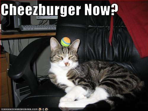Cheezburger Image 2716186880