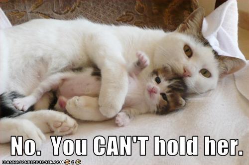 cute kitten momcat - 2716227584