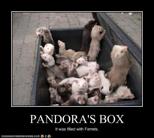 box lolferrets - 2716332800