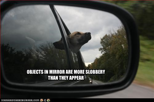cars,german shepherd,mirror,slobber