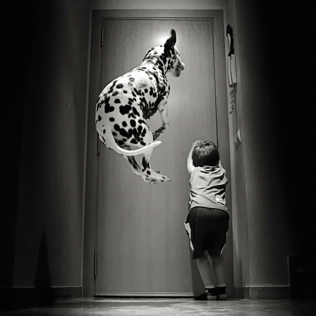 black and white photos of kids and their pets - Dog in mid-air as kid tries to open the door.