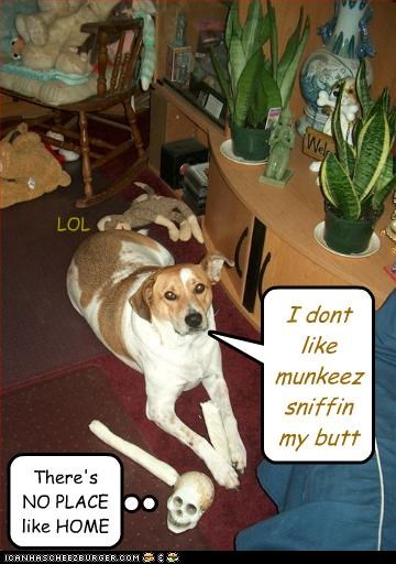 I dont like munkeez sniffin my butt There's NO PLACE like HOME LOL