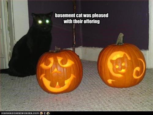 basement cat halloween meowloween offering pumpkins - 2720161536