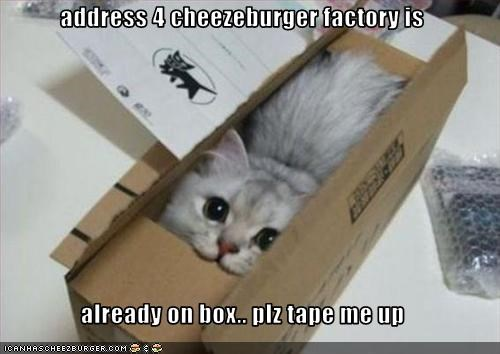 Cheezburger Image 2720810496