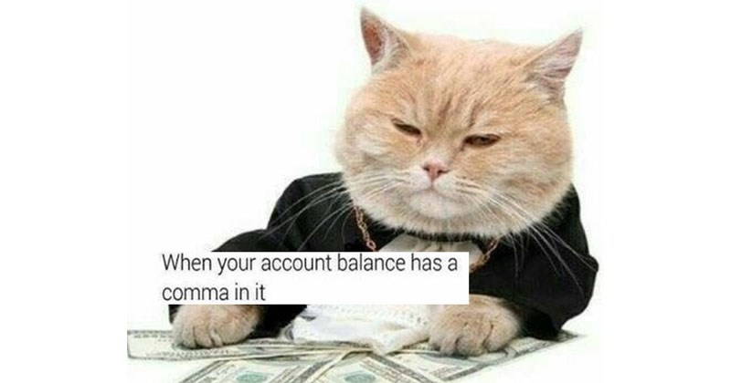 Collection of funny animal memes, mostly cats and dogs.