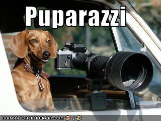 camera,dachshund,paparazzi,truck