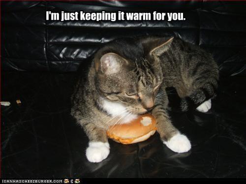 cheezburger helping lies warm - 2722597120