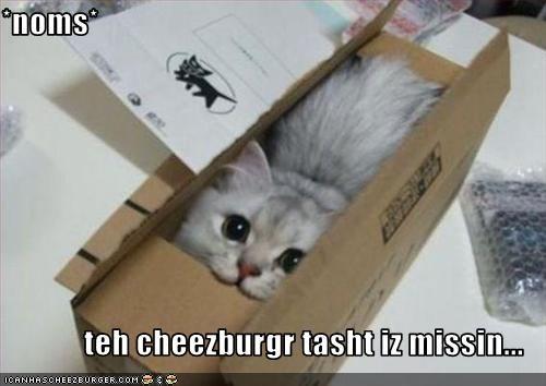 Cheezburger Image 2724284928