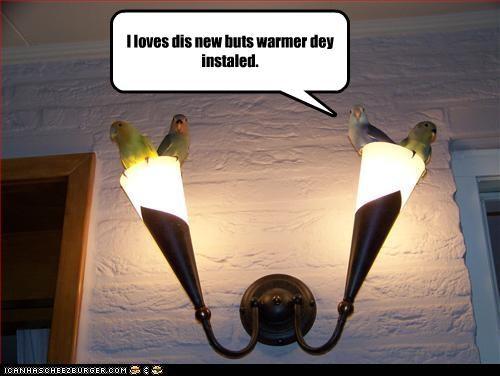 lamp lolbirds warm - 2725647360