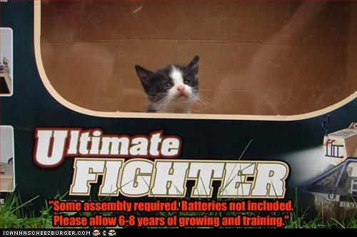 cute kitten toy - 2726137856