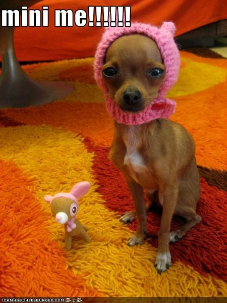 chihuahua hats mini me toys