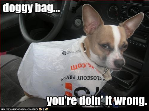 bag chihuahua doin it wrong plastic bag