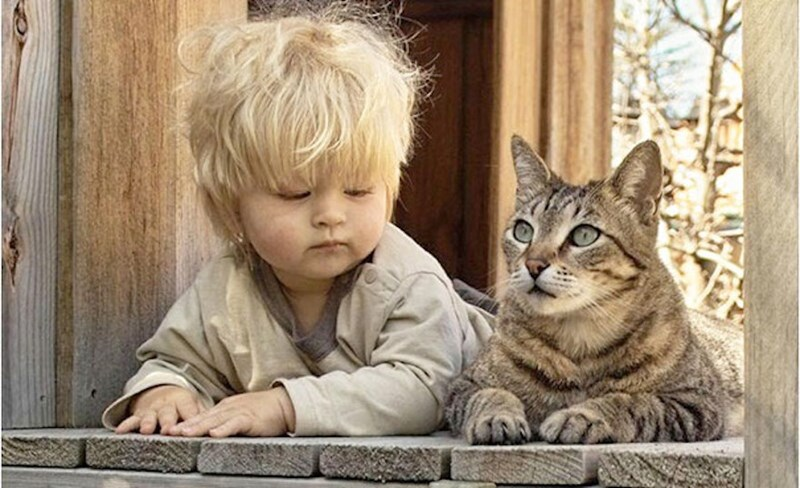recommended cat breeds for kids