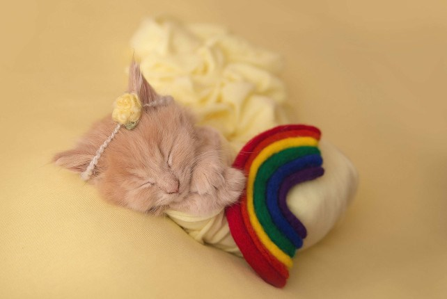 A very tiny kitten wrapped in a yellow blanket sleeping - cover for a photoshoot of a newborn kitten