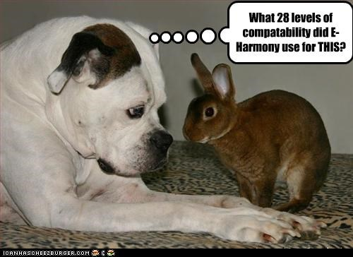 bunny dating pitbull website