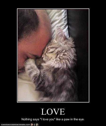 annoying love nap - 2733462016