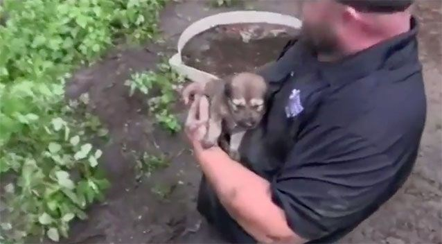 11 puppies were saved from a hole in detroit area before the floods came, the cover is a very cute little puppy that has been rescued in the rescuers arms