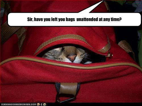 bag hiding - 2734687744