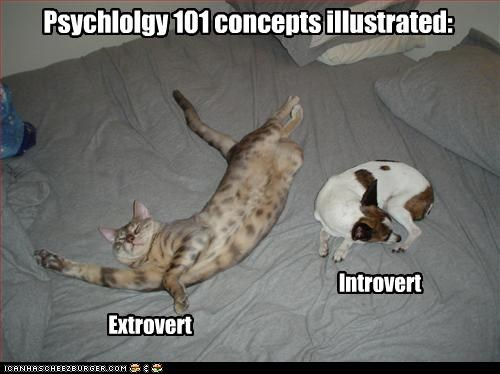 bed,loldogs,psychology