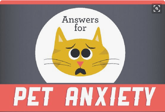 infographics about pet anxiety