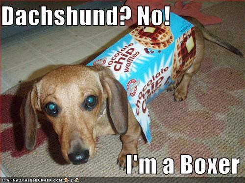 boxer costume dachshund disguise mailbox - 2737922816