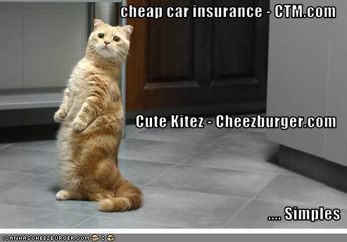 Cheezburger Image 2738014464