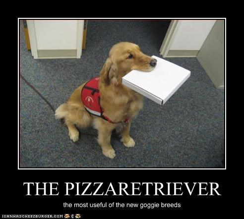 box fetch golden retriever mouth new pizza - 2739031040