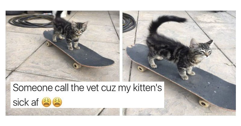 Collection of funny memes about cats, dogs, animals, dating, relationships, sex, snapchat, titanic, movies, money, jobs, life, the little mermaid, cars.