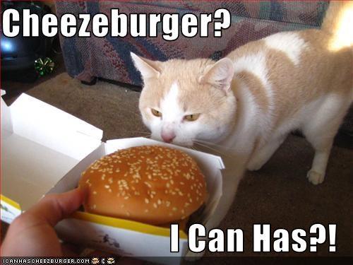 Cheezburger Image 2739902208