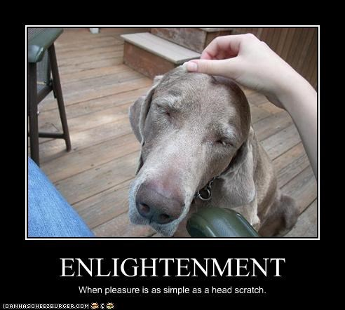 happy philosophical pleasure scratch simple weimaraner - 2743729152
