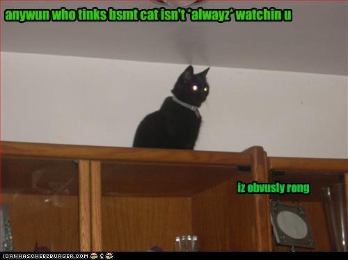 anywun who tinks bsmt cat isn't *alwayz* watchin u