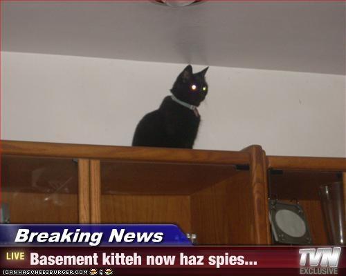 Breaking News - Basement kitteh now haz spies...