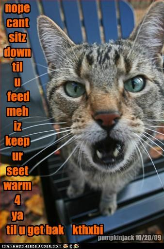 nope cant sitz down til u feed meh iz keep ur seet warm 4 ya til u get bak kthxbi pumpkinjack 10/20/09