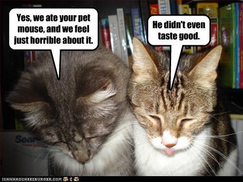 bad cat mouse nom nom nom - 2745005568