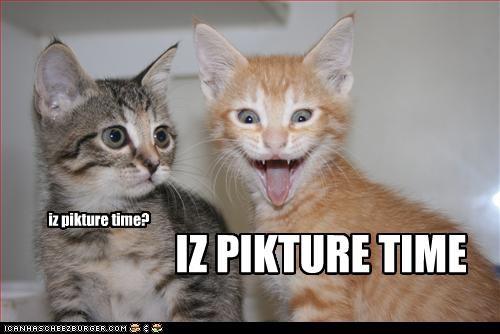 excited kitten - 2748534528