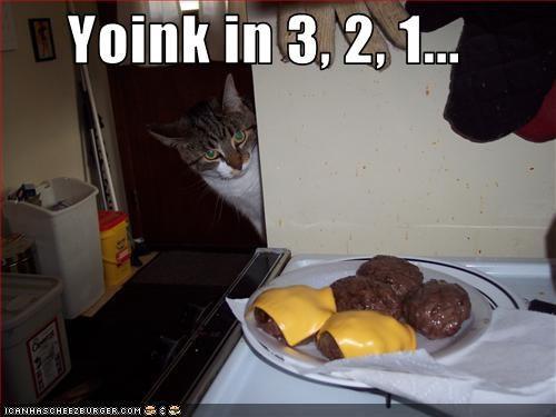 Cheezburger Image 2749397248
