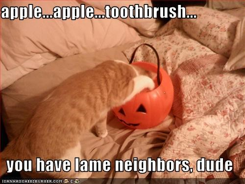 candy,do not want,halloween,meowloween,neighbor