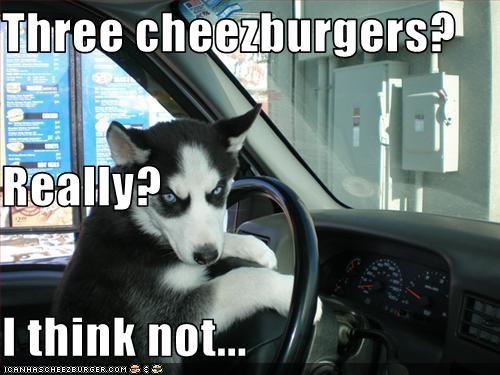 Cheezburger Image 2752701440