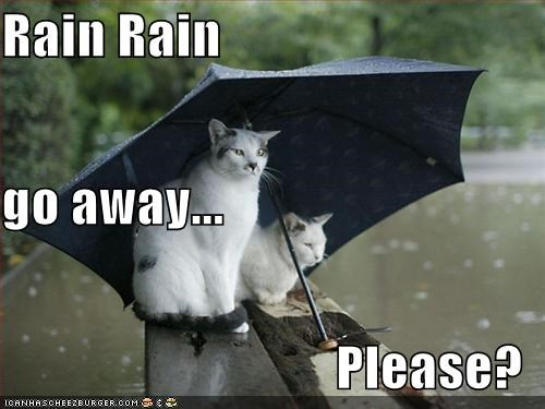 Rain Rain Go Away Please Cheezburger Funny Memes Funny Pictures