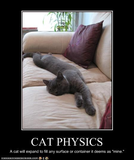"CAT PHYSICS A cat will expand to fill any surface or container it deems as ""mine."""
