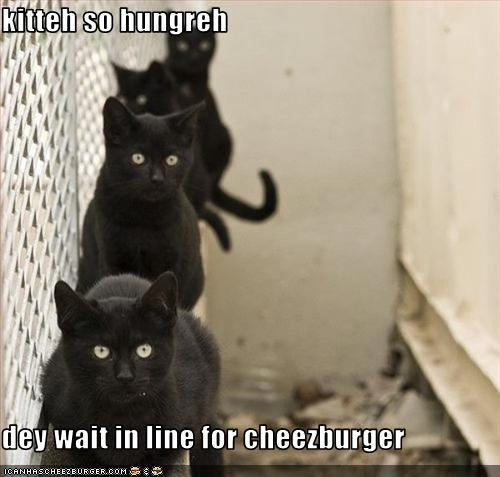 Cheezburger Image 2757542912