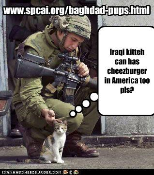 www.spcai.org/baghdad-pups.html Iraqi kitteh can has cheezburger in America too pls?