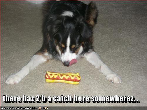 australian shepherd,hotdog,squeaky toy,suspicious,toys