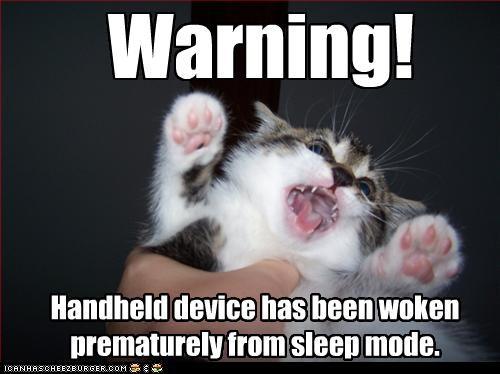 angry awake cute handheld kitten - 2759051264