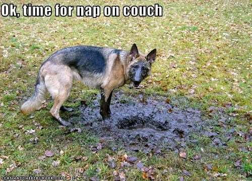 couch,dirty,face,german shepherd,mud,nap,paws