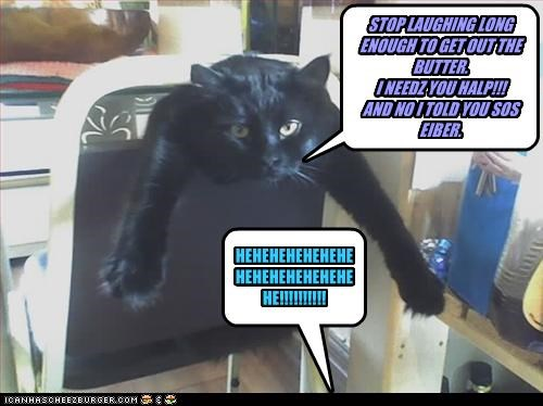 Cheezburger Image 2759406592